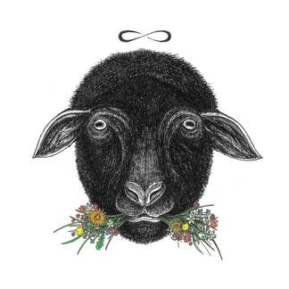 Black Sheep Artwork