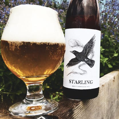 starling beer