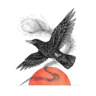 Starling Artwork