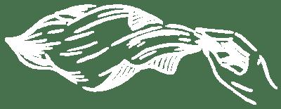 The Veil Brewing Online Shop