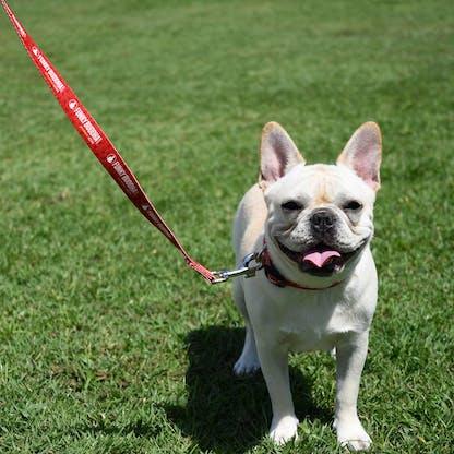 Dog Leash 2